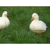 Call Duck ducklings
