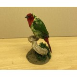 Pied Red Faced Parrot Finch