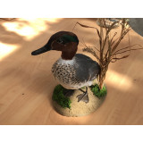 Silver Green Winged Teal drake