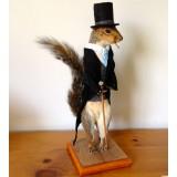 Squirrel 'special'